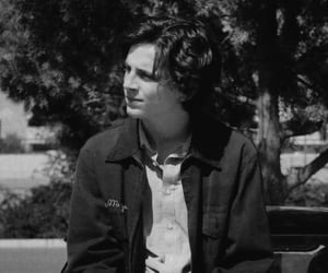 timothee chalamet and lady bird image