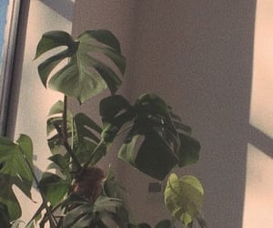 wallpaper, plants, and aesthetic image