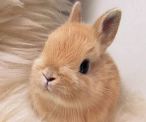 animal, bunny, and cute image