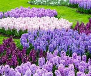 garden, nature, and pretty image