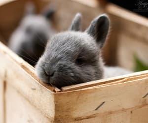baby animals, bunnies, and bunny image