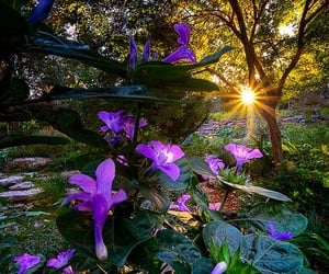 flowers, trees, and sun image