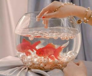 aesthetic, fish, and goldfish image