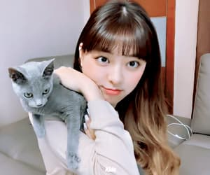 cat, kpop, and gif image