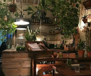 plants and theme image