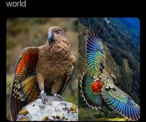 beautiful, bird, and tropical image