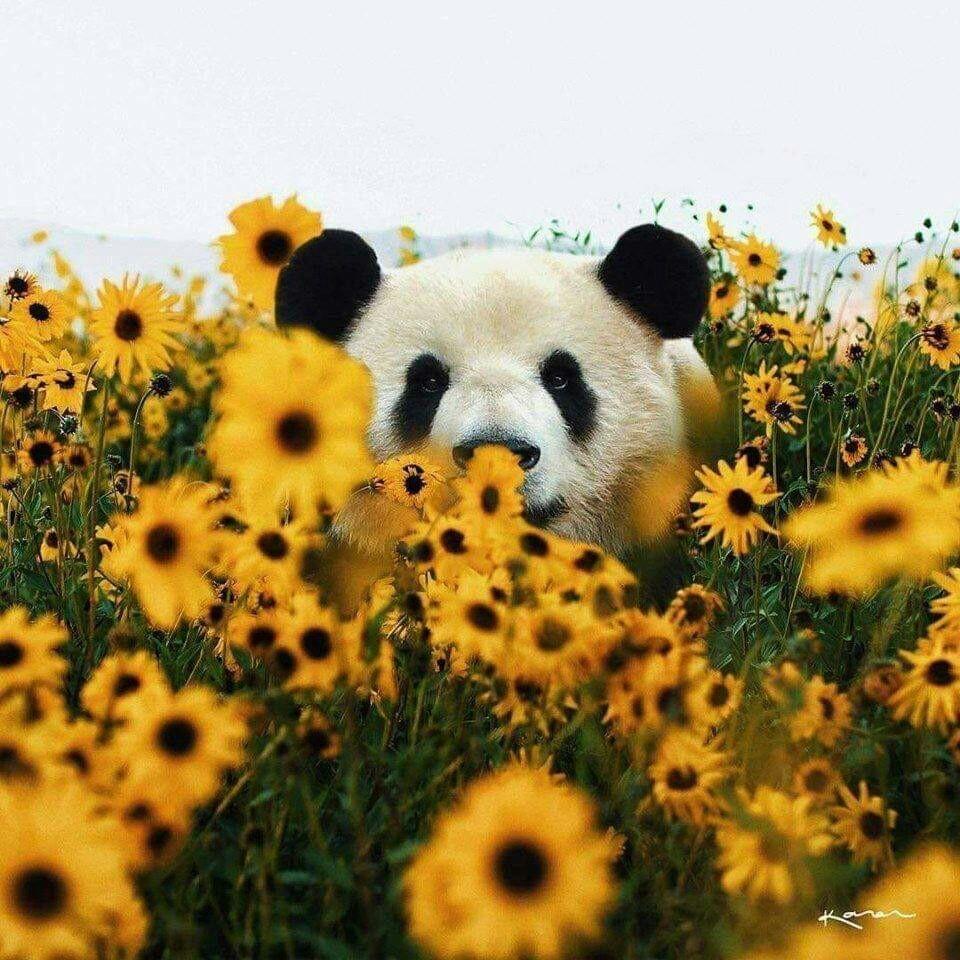 panda, animal, and flowers image