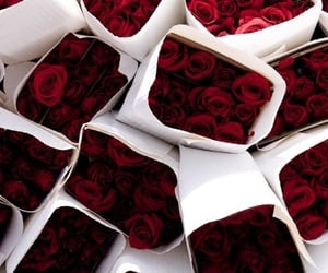 red roses, love wallpapers, and wallpapers with red roses image