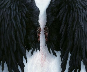 black and wings image