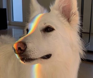 dog, rainbow, and animal image