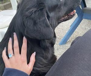 blue, dog, and ring image