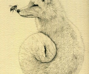 fox, drawing, and art image