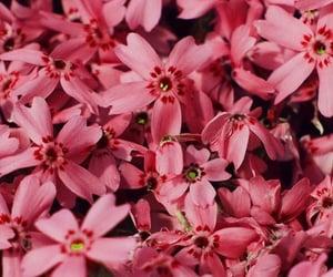 flower wallpaper, pink flower, and pink wallpaper image