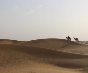camel, summer, and desert image