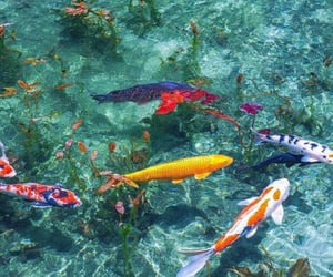 fish and water image