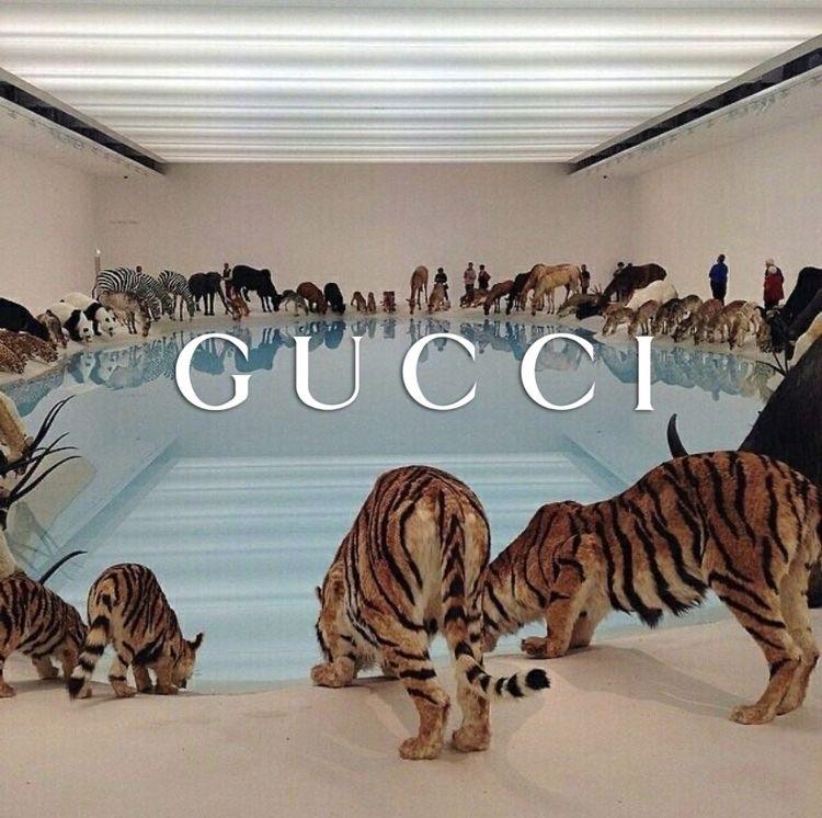 animal, tiger, and pool image