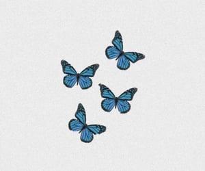 butterflies addiction