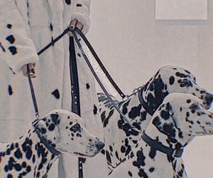 aesthetic, dogs, and dalmation image