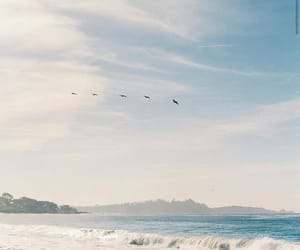 aesthetic, birds, and ocean image