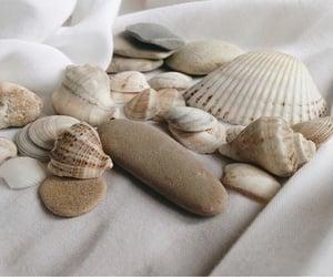 beach, beige, and shells image