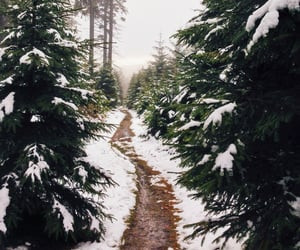 christmas tree, trees, and winter image