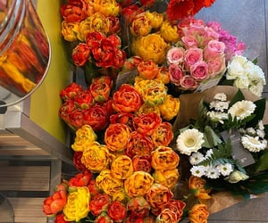 colorful, flowers, and roses image
