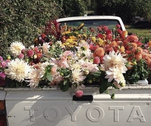 flowers, car, and nature image