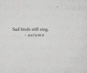 autumn, beautiful, and bird image
