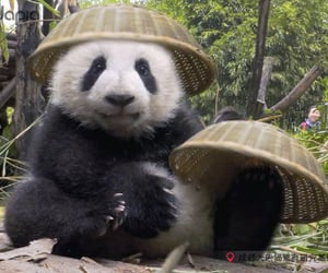 animal, tender, and adorable image