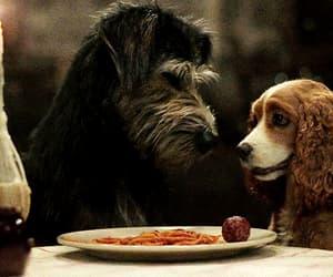 animals, childhood, and dinner image