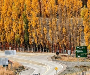 autumn, colores, and roads image