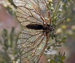 butterfly, nature, and glitter image
