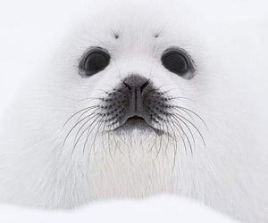 Animales, blanco, and nieve image
