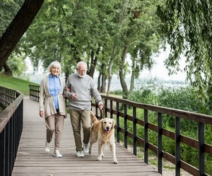 home care and senior care image