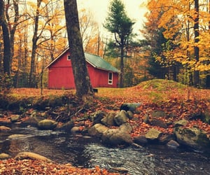 autumn, forest, and river image
