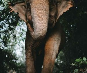 animal, elephant, and photography image