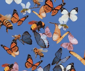 animal, butterfly, and sparkle image