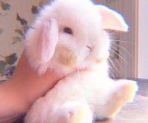 bunny, animal, and cute image