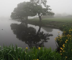alternative, beautiful, and fog image