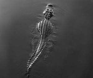 animal and water image