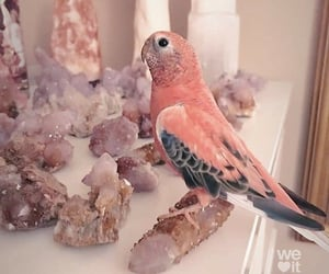 bird, pink, and pretty image