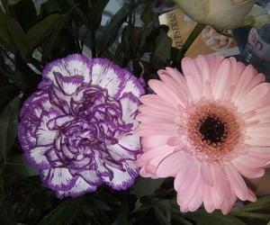 Fleurs, rose, and violet image