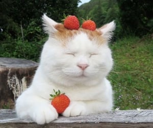 cat, aesthetic, and strawberry image