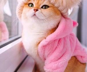 cat's image