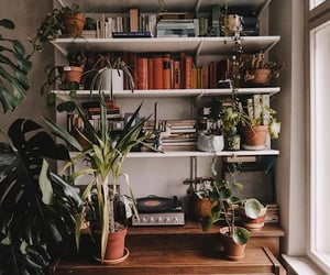 plants and books image