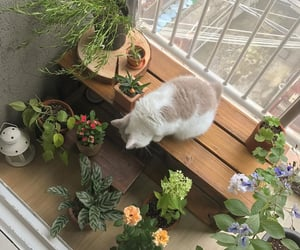 aesthetic, cat, and plants image