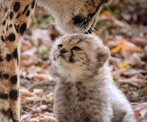 animal, pet, and cute image