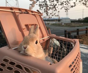 rabbit, aesthetic, and animal image