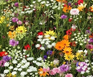 flowers, aesthetic, and bloom image