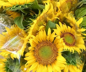 flores, flowers, and sunflowers image
